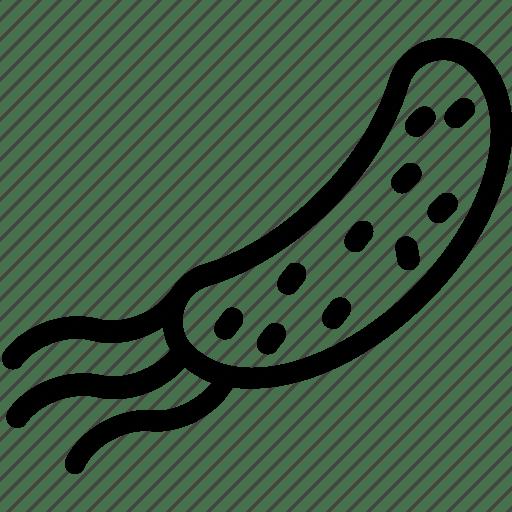 Bacteria, ebola, germs, microbe, virus icon