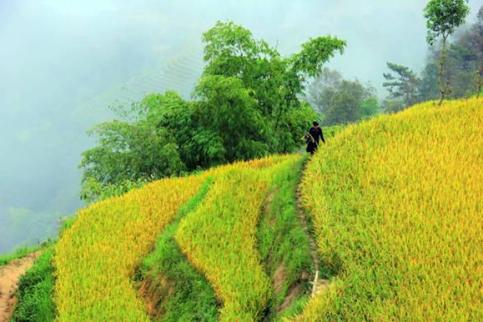 Sống ở Bản Phùng phần đông là người La Chí, những con người hiền lành như cỏ cây, không sõi tiếng Kinh nhưng rất hiếu khách. Họ luôn sẵn sàng đưa du khách về nhà, mời uống nước rễ cây được đun trong chiếc ấm đen kịt.