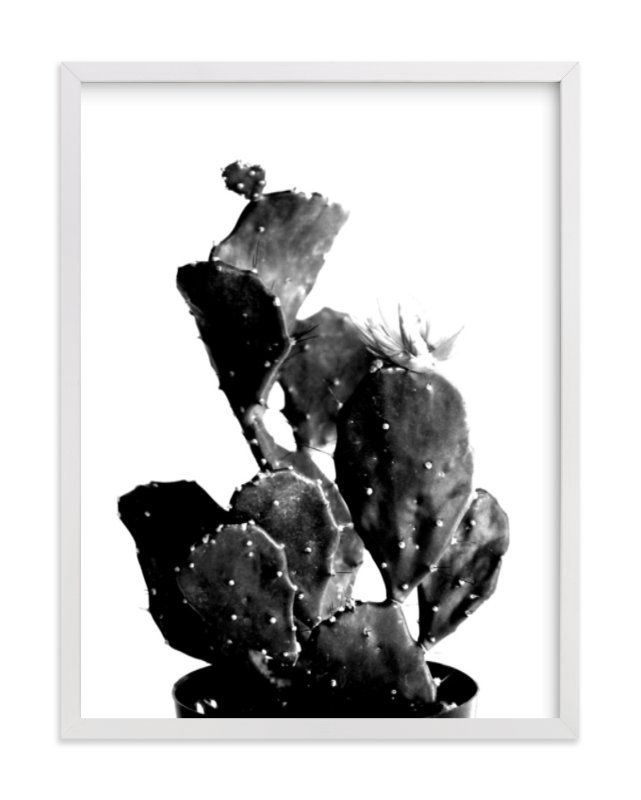 black cactus photography limited