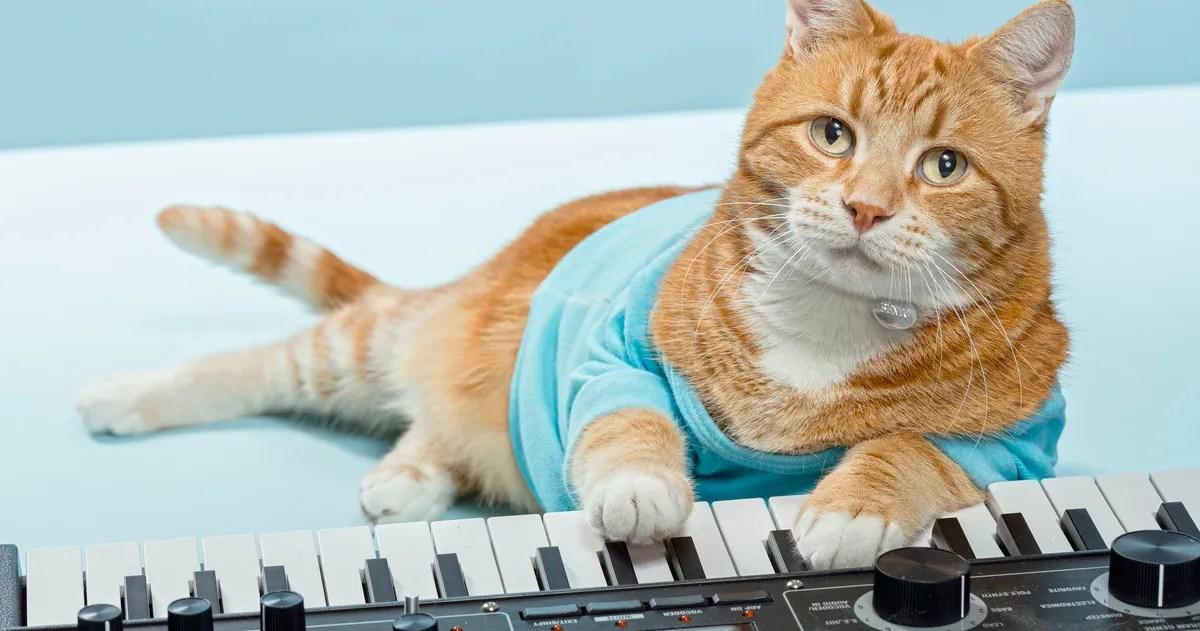 keyboard cat internet sensation