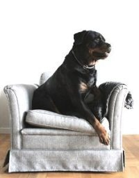 How To Stop Your Dog From Jumping On The Furniture ...