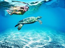 Turtle watching in Tobago | Caribbean travel inspiration