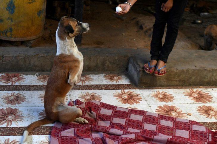 AFP5959733807262136325546473372999943722808 accident animal dog india society 2 - Callejera atropellada por el tren recibe prótesis y será adoptada en Gran Bretaña. Tendrá vida nueva