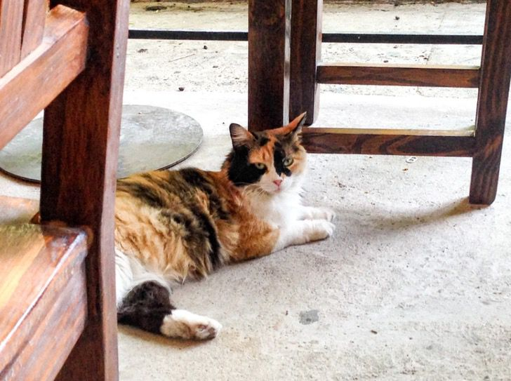 """Captura de Pantalla 2020 12 31 a las 12.23.59 - Gato volvió a casa para Navidad después de 5 años perdido en la calle: """"Parece un milagro"""""""