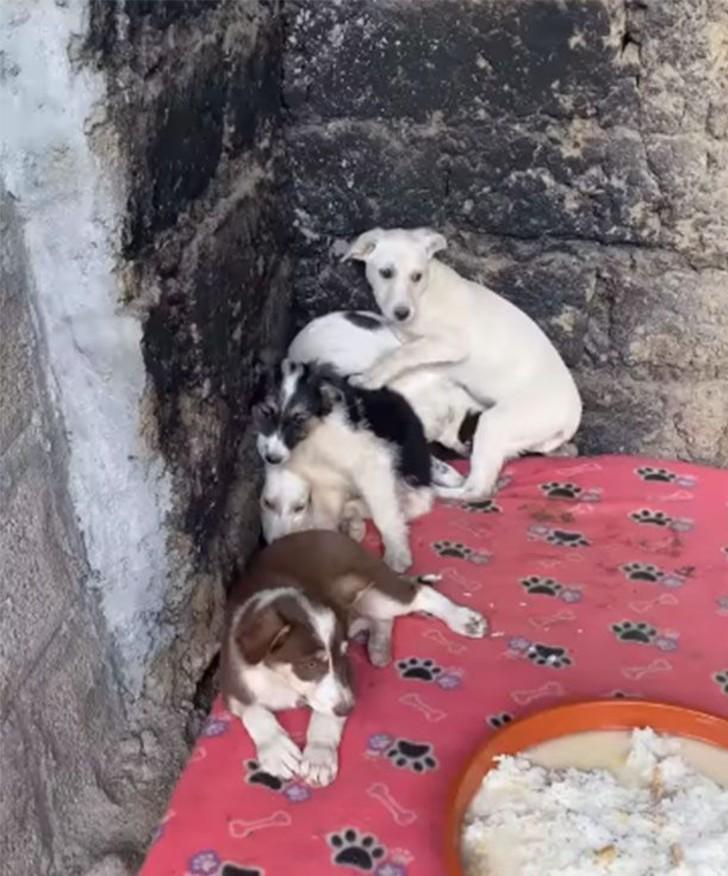 patitas 3 - Cachorros rescatados lucen temerosos al llegar a su refugio. Su timidez es signo de sufrimiento