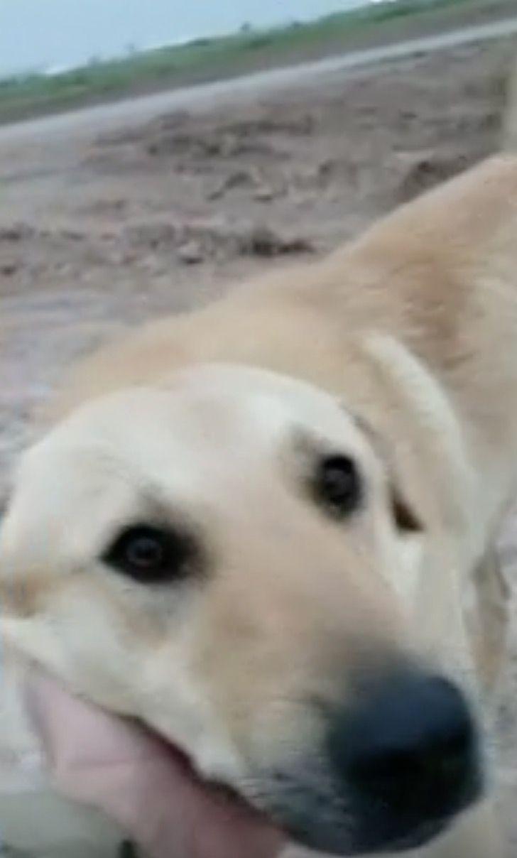 Captura de Pantalla 2021 01 19 a las 13.24.44 - Soldado rescató a perro callejero en Irak y lo llevó consigo a Estados Unidos. Fue su compañero