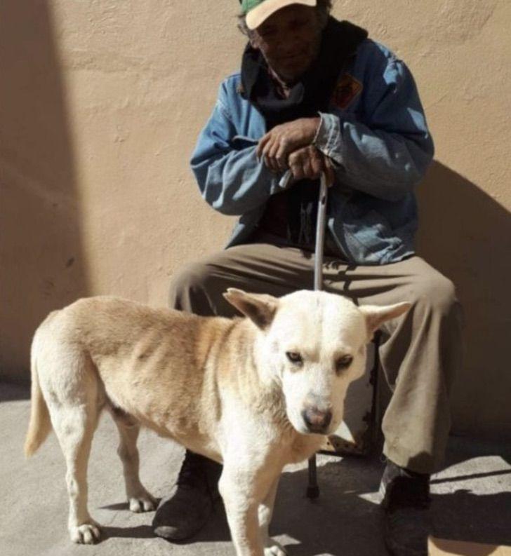 Captura de Pantalla 2021 01 21 a las 11.33.37 - Fiel perro espera a su dueño fallecido en la puerta de su casa. No quiere moverse hasta poder verlo