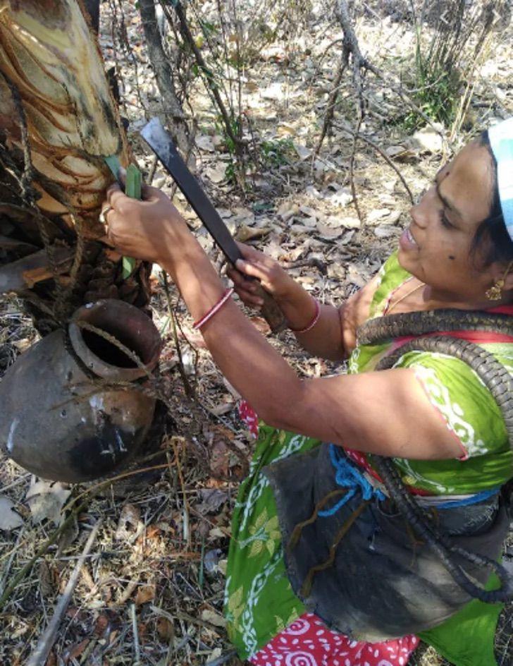 Captura de Pantalla 2021 01 21 a las 14.59.13 - Mujer escala palmeras de 9 metros para extraer vino de palma y mantener a su hija enferma. Ídola