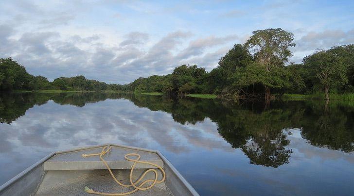 Captura de Pantalla 2021 01 28 a las 18.12.55 - Declaran al delfín gris en peligro de extinción por la deforestación en el Amazonas. Dañan su hogar