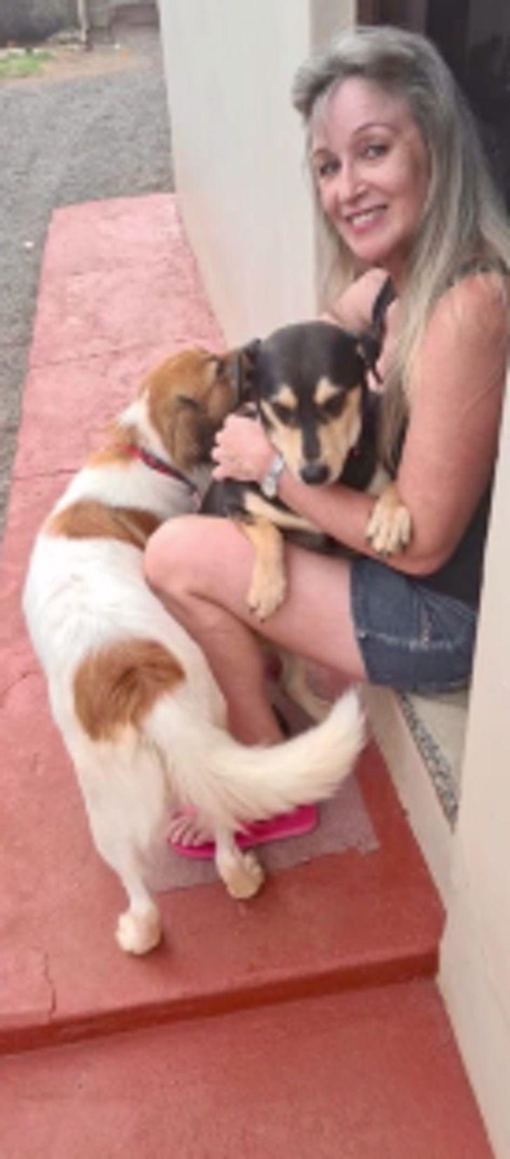Captura de Pantalla 2021 01 29 a las 09.14.51 - Cartera le regala comida a perros callejeros mientras entrega paquetes en Brasil. Creó un vínculo
