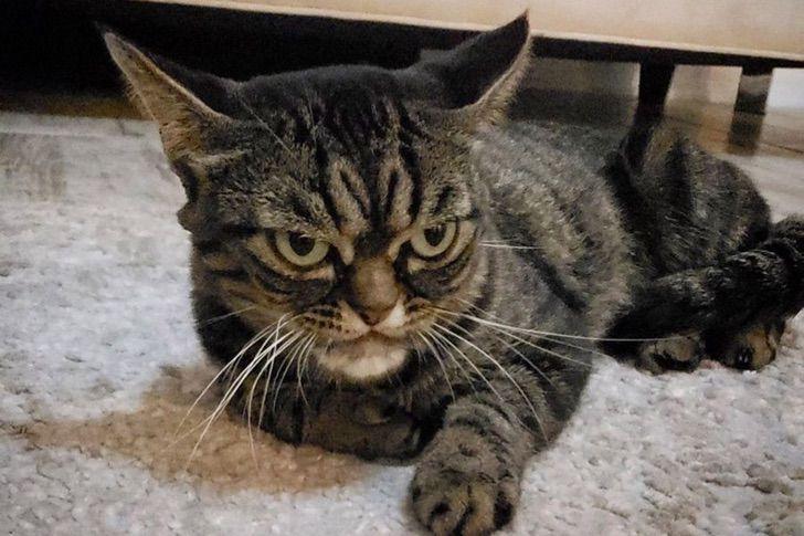 gato cuarentena desesper morder atacar cuidador0004 - Gatos se están haciendo más agresivos por sus dueños en cuarentena. Mucho tiempo juntos los fastidia