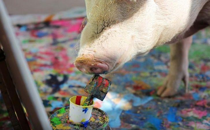 Captura de Pantalla 2021 03 24 a las 16.27.54 - Cerdita fue salvada de un matadero y se convirtió en una artista de la pintura. La llaman Pigcasso
