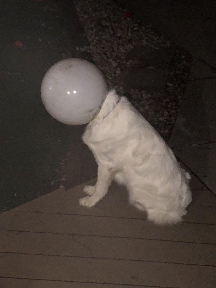 """EwscAWLXEAMBfQC - """"Estaba perfectamente quieta"""": Hombre se confunde al ver por la ventana y notar a su perra con casco"""