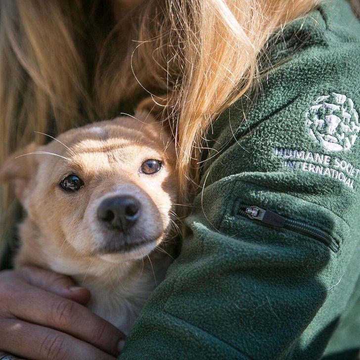 perro mercado carne rescate0003 - Cachorro fue rescatado de una granja de carne en Corea de Sur. Hoy gusta de jugar a las escondidas