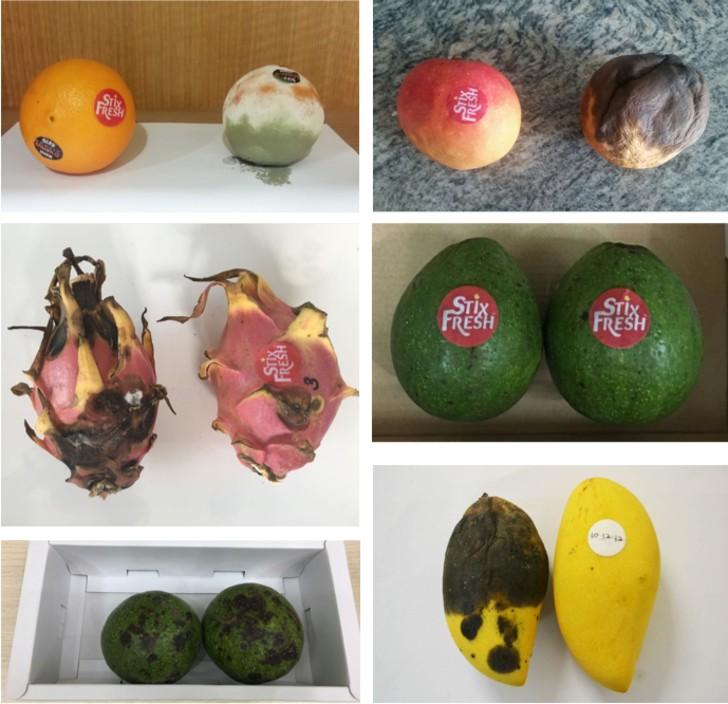 pegatinas 2 - Joven crea pegatinas que mantienen la fruta fresca por 15 días. Está hecho de cera de abejas