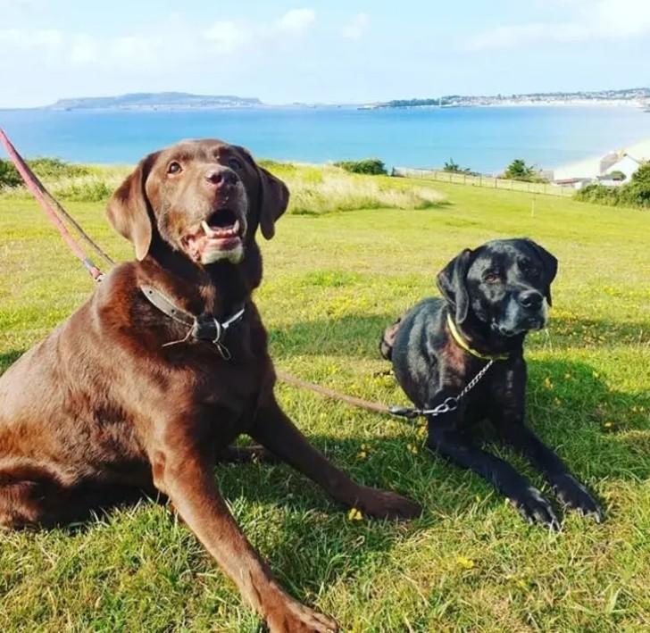 """perro despido 2 - Mujer fue despedida del trabajo por faltar tras la muerte de su perro: """"Es como perder a un hijo"""""""