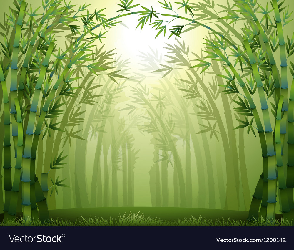 bamboo trees inside the
