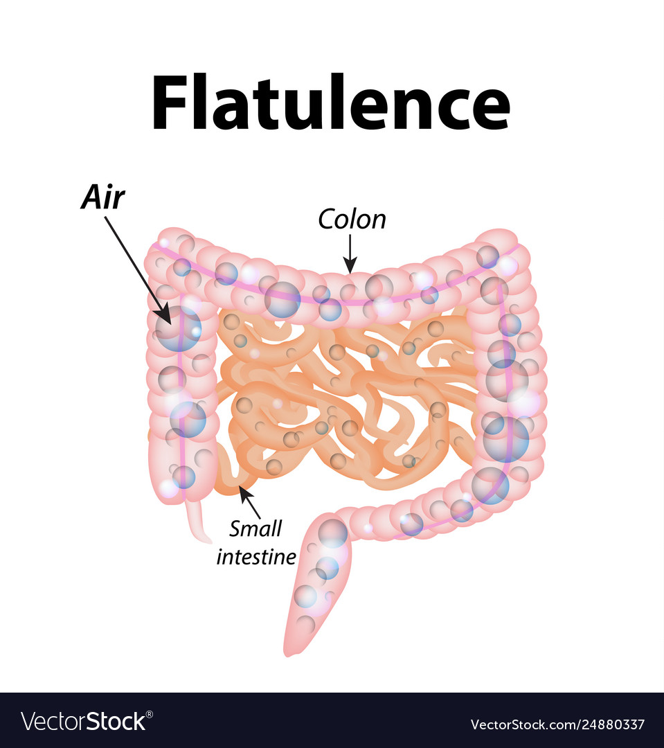 hight resolution of flatulence gases in small intestine the vector image