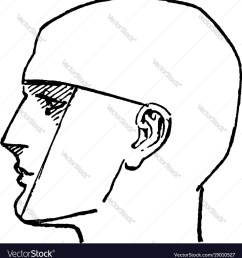 diagram of side of face [ 974 x 1080 Pixel ]