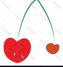 diagram of the cherry [ 899 x 1080 Pixel ]