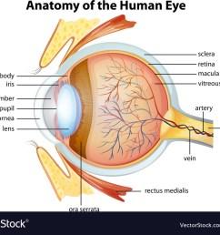 anatomical diagram of the human eye [ 1000 x 803 Pixel ]