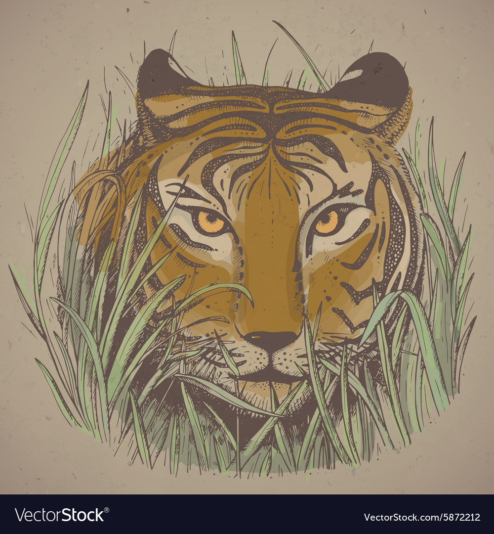a tigers face in