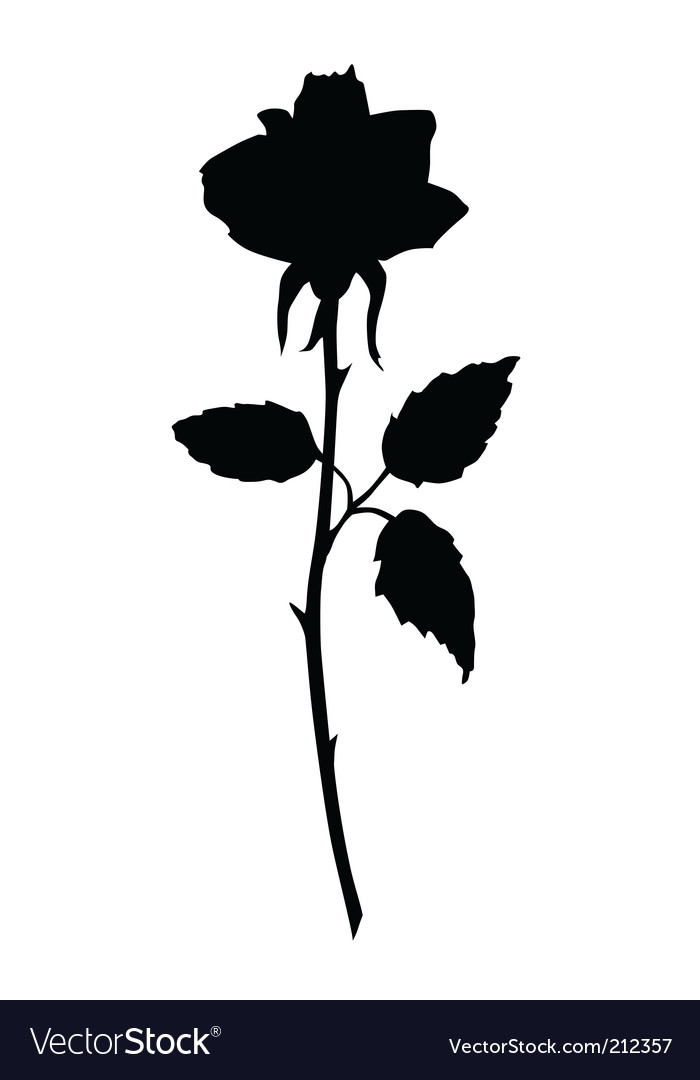 rose black silhouette