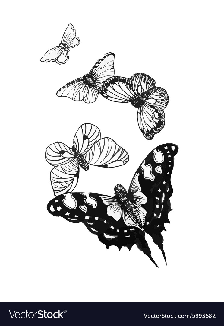 Black And White Butterfly Tattoo : black, white, butterfly, tattoo, Black, White, Butterflies, Tattoo, Royalty, Vector