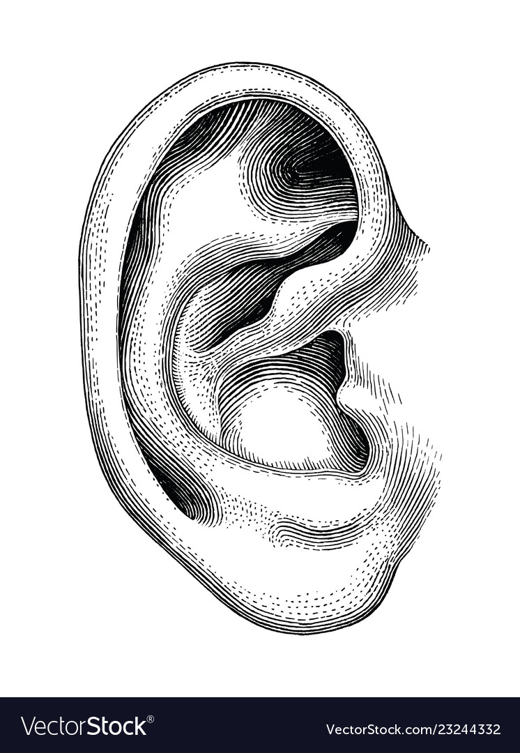 hight resolution of snake hearing diagram