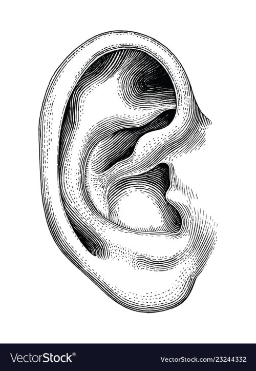 small resolution of snake hearing diagram