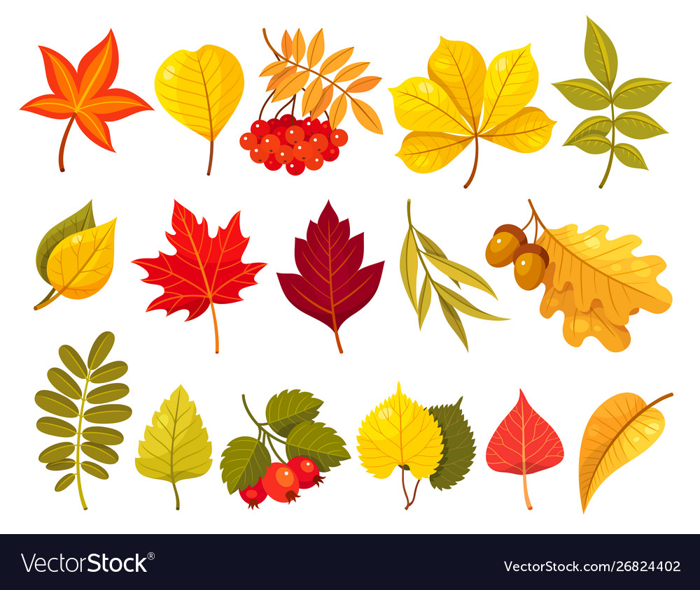 autumn leaves flat isolated