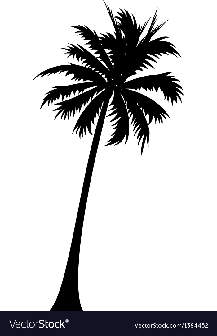 Palm Tree Vector Art : vector, Royalty, Vector, Image, VectorStock