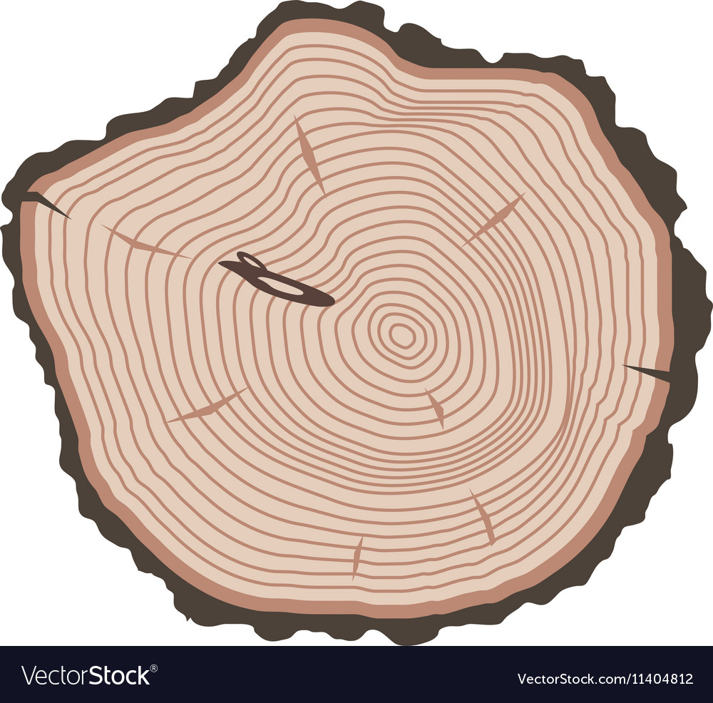 hight resolution of tree slices isolated vector image