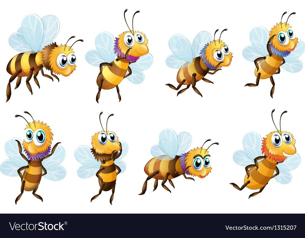 eight bees in different