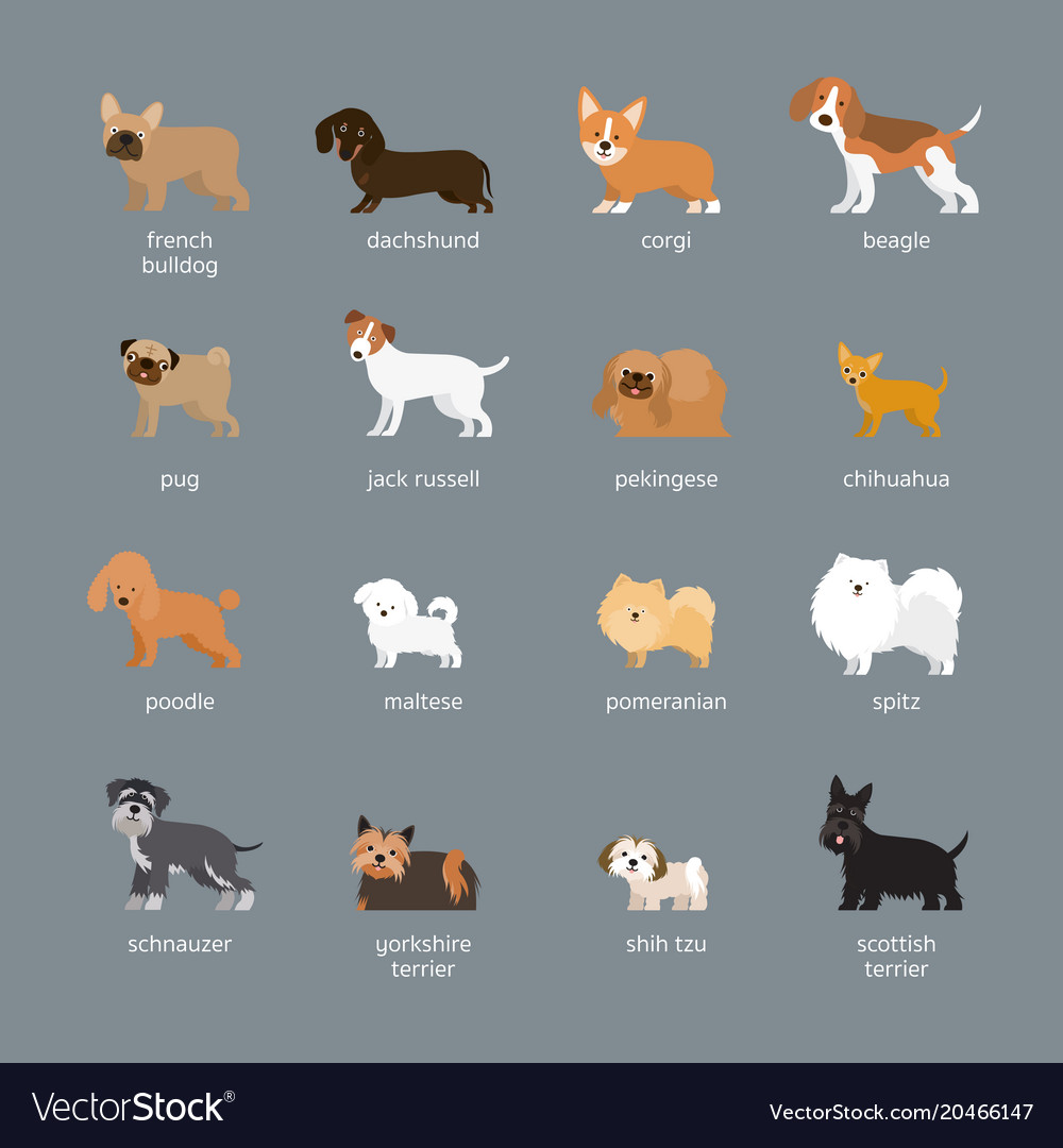 Dog Breeds Set Small And Medium Size Royalty Free Vector