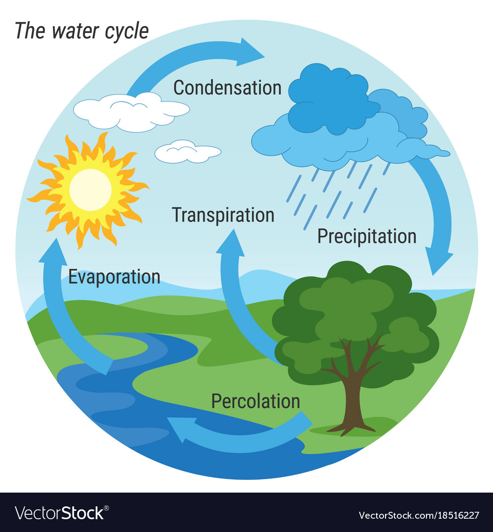 medium resolution of water cycle colour vector image