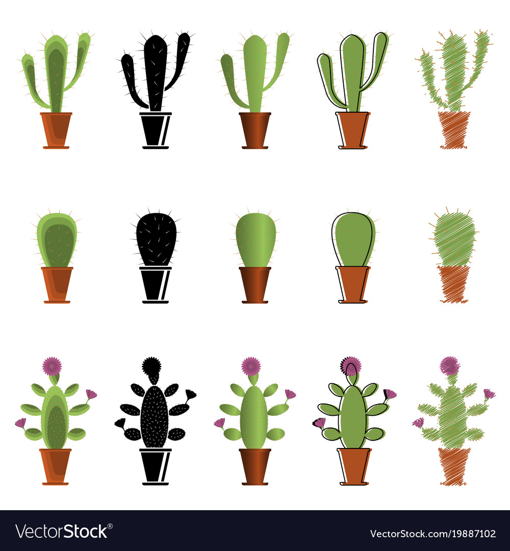 set of cacti in