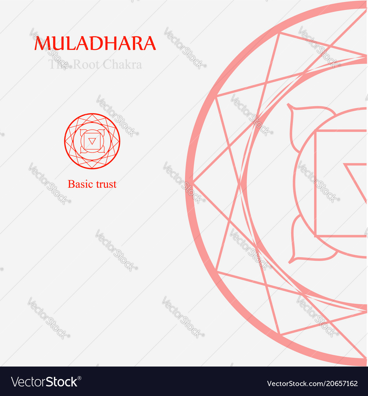 hight resolution of muladhara the root chakra vector image