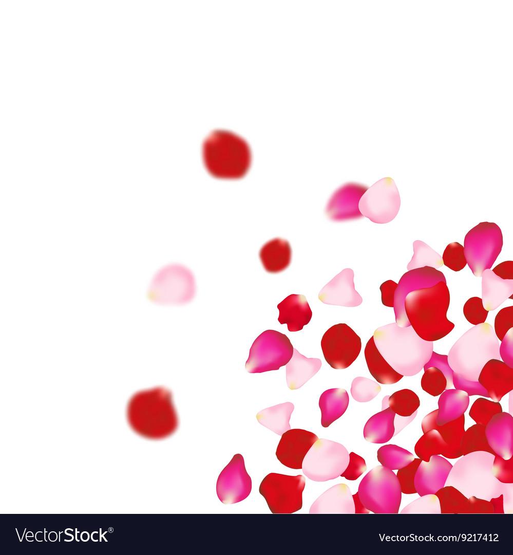 rose petals falling background