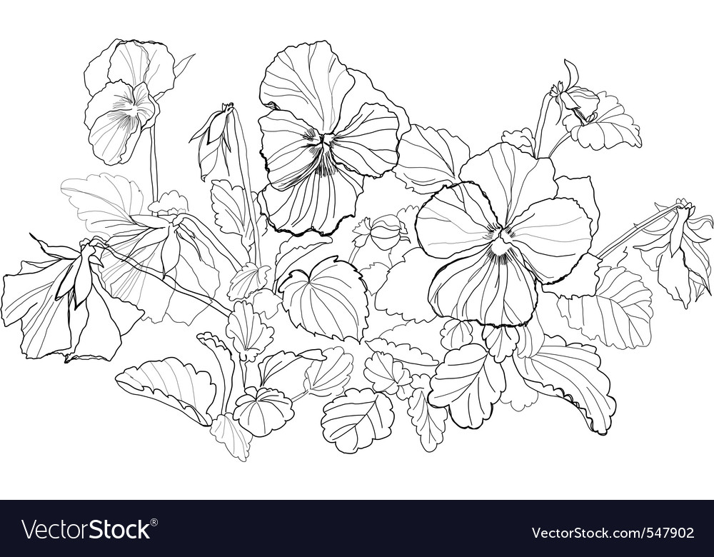 viola flowers drawing on