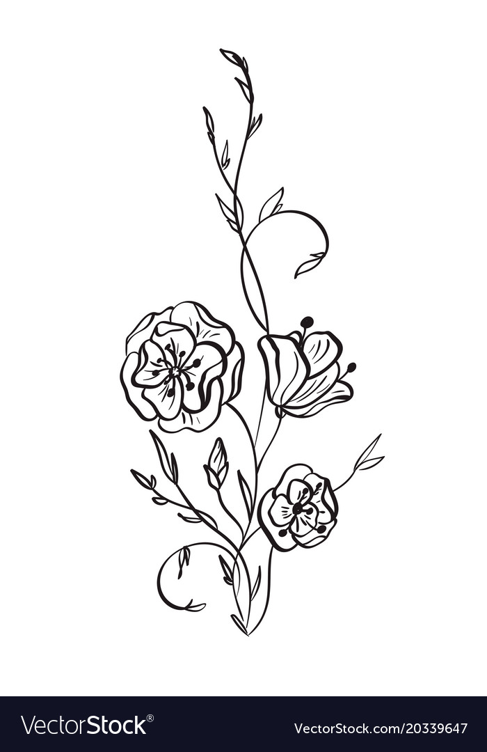 hand drawn wild rose