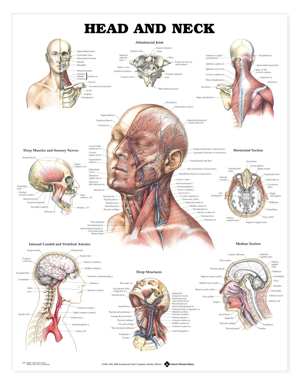 hight resolution of spine diagram chart