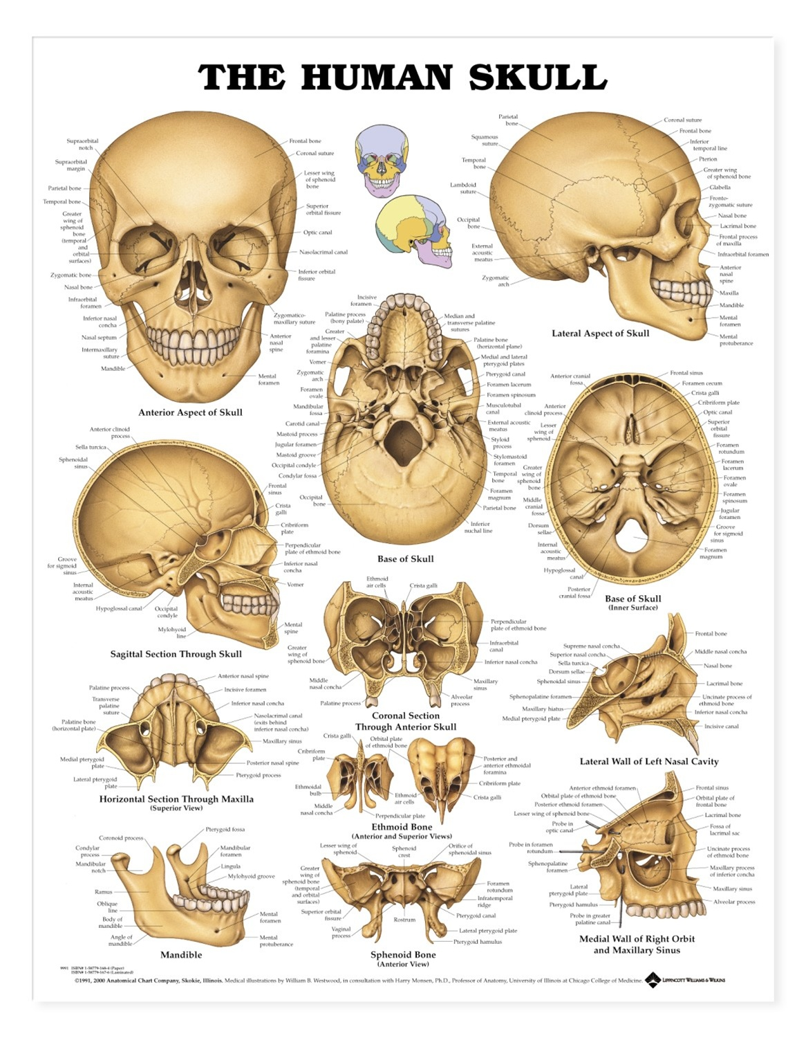 hight resolution of anatomy skull diagram labeled