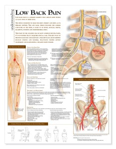 Understanding low back anatomical chart anatomy models and also ganda fullring rh