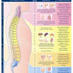 Spinal Cord And Nerves Diagram Shrub Graphic Symbols Nerve Function Anatomical Chart Anatomy Models