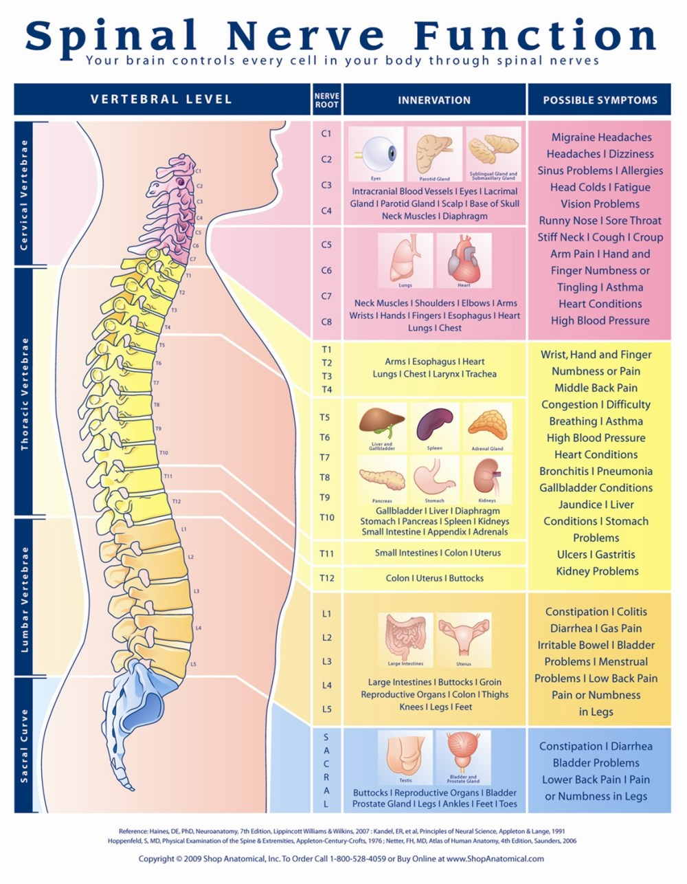 medium resolution of spinal nerve function anatomical chart anatomy models and anatomical charts