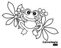 Dibujo de Rana Calmatopic para Colorear - Dibujos.net