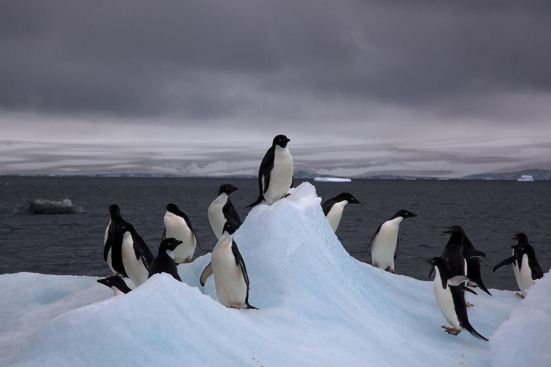 Are Tourists Exposing Antarctic Birds To Human Diseases