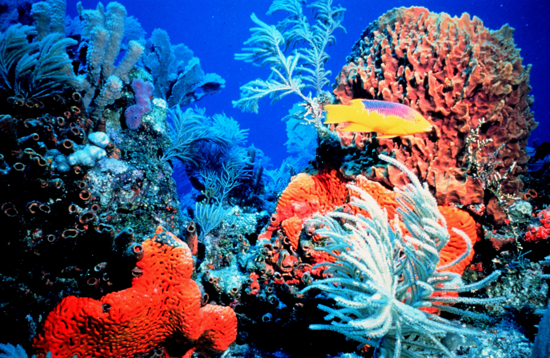 Can Lab Grown Super Coral Rescue Our Rapidly Dwindling
