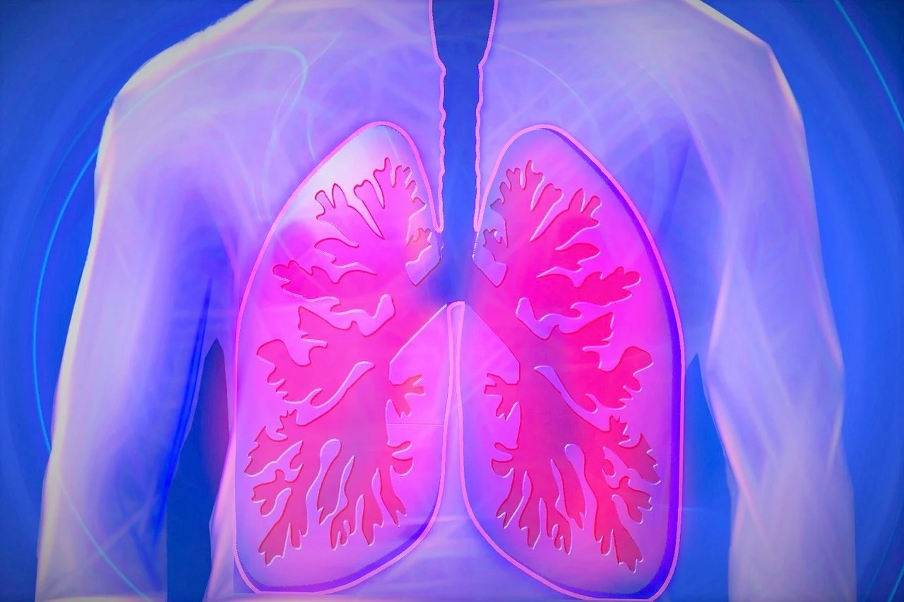 Lungs Don T Just Help Us Breathe They Produce Blood Too Kids News Article
